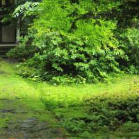 雨降る伊佐須美神社にて