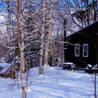 穏やかな冬の一日