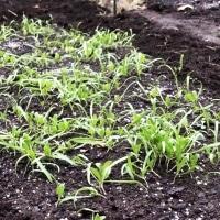 収穫と土づくり