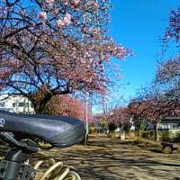 サイクリングにはいい気候と