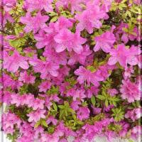 敷地内に咲いている花