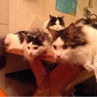 猫好きさん みんなで集まろう~の会