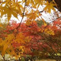 よもぎうどん、山田のかかし、紅葉、リベンジ