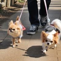 石神井公園でお散歩♪