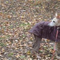 冷たい雨の予報