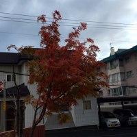 藻岩山の秋