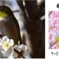 野鳥 ≪メジロ≫ 02