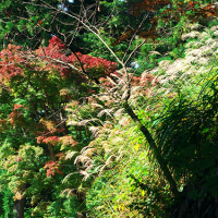 高尾山の小さな秋