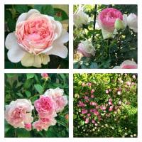 薔薇の時間♪