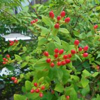 赤色の花・実3種