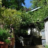 我が家の裏庭
