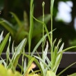 湿原に咲く花が我が庭でも観られそう!