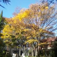 深まりゆく秋のキャンパスにて