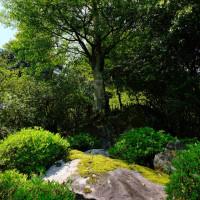大興善寺 石の上にも100年の木