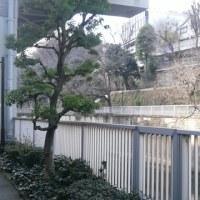 緑の遊歩道~鸚鵡日記3
