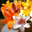 Many lilies ♪♪