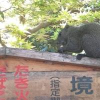 鎌倉牡丹園
