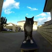 �� Cat sk8boar. / Super Girl !!/����ķ�ӱۤ����ɤ򽳤롪�������ܡ��Υȥ�å������˥����ǭ