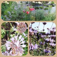 生け花と庭の花