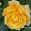 薔薇の園  * 2017 *  Vol.45 * 万葉 *
