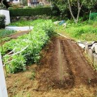 緑の中でのIKOI農園作業