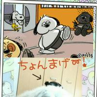 ちょんまげ~っ❗