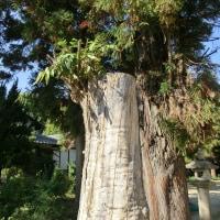強い 樹の生命力