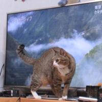 テレビっ子ゆん