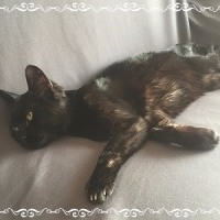 黒猫のkikiちゃん