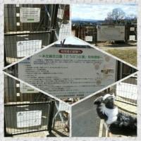 ドッグランにて~本庄総合公園