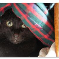 黒猫 便り