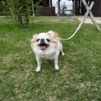 アズキさんkikiさん ('-'。)公園で散歩中です。