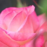 奉仕へ向かう意志と情熱☆ ~ネオアデプトプログラム~