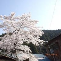 蕨山2017.4.45-詳細と写真