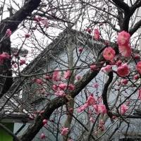 「川島英一郎ピアノリサイタル」のポスターが自治会の掲示板に
