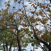 2016/10 秋の森林公園を歩く