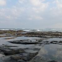 1/24探鳥記録写真(狩尾岬の鳥たち:ウミアイサ、ヒメウ他)