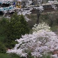 南東北にも春が来た!