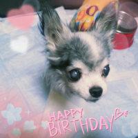 ネ子ちゃん18歳のお誕生日。