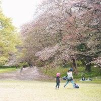 sakura 桜とお着物♪