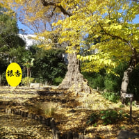 200年の歴史・・・向島百花園