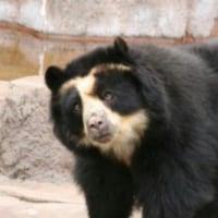また熊ですか?って、、