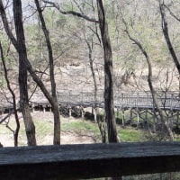 529.廻廊のある森