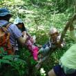 森や川で自由に遊ぼう 2017年7月の森のようちえん