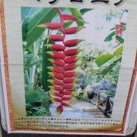 トロピカルドーム温室の花
