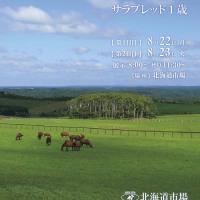 【サマーセール2016(Summer Sale、1歳)】の「上場馬名簿」が発行!