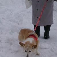 社長と雪道を行く。