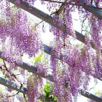 桜の花見は・・・。