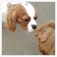 明日です!26日(金)京都パーカーハウスロール 19:30〜♪