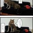猫とバイオリン
